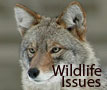 wildlife issues